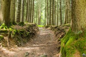 Waldweg H�rnergruppe