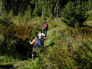 Durch den Wald-0597