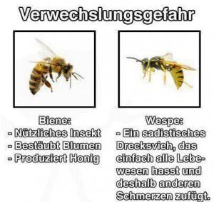 verwechslungsgefahr-biene--wespe